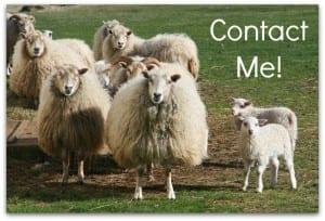 Contact Me Sheep