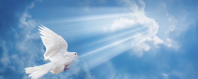 PURSUE PEACE!